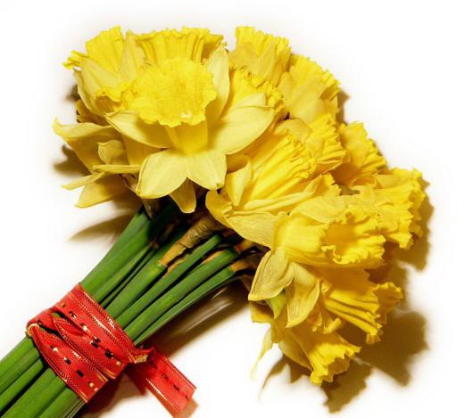 kartynky.co.ua - найкращі фото квітів і букетів